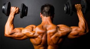 Muscle Building Back and Biceps Workout