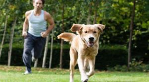 Can A Pet Improve Your Life
